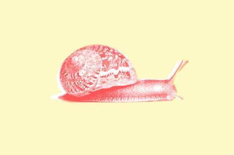 snail.w529.h352.2x